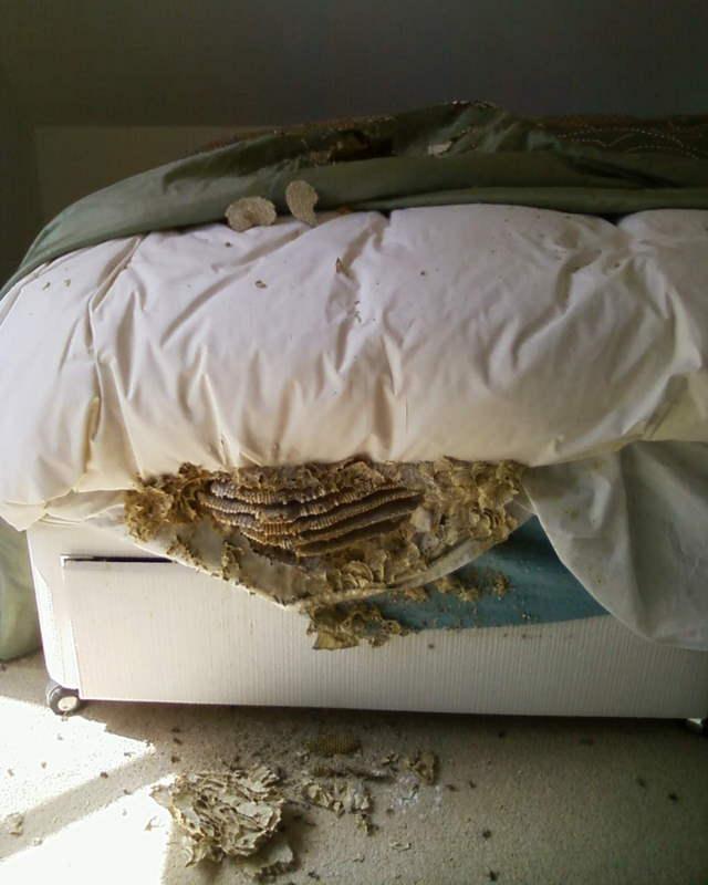 Pest Control In Hastings